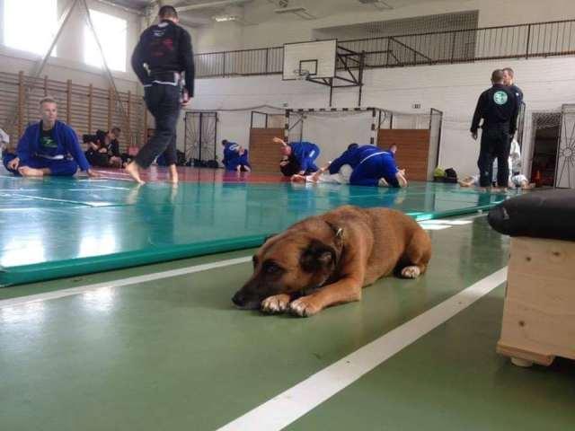 Velünk volt a Táborban, így az edzéseken is Vuk kutyus is